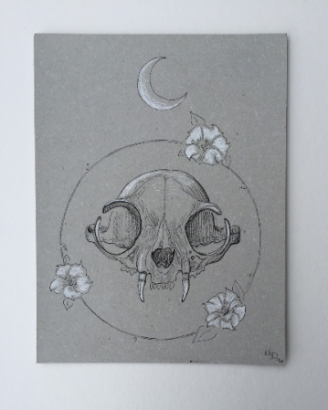 Untitled Bat Skull