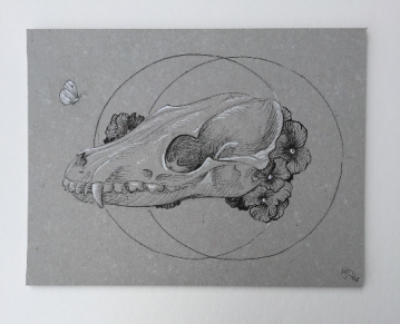 Untitled Fox Skull
